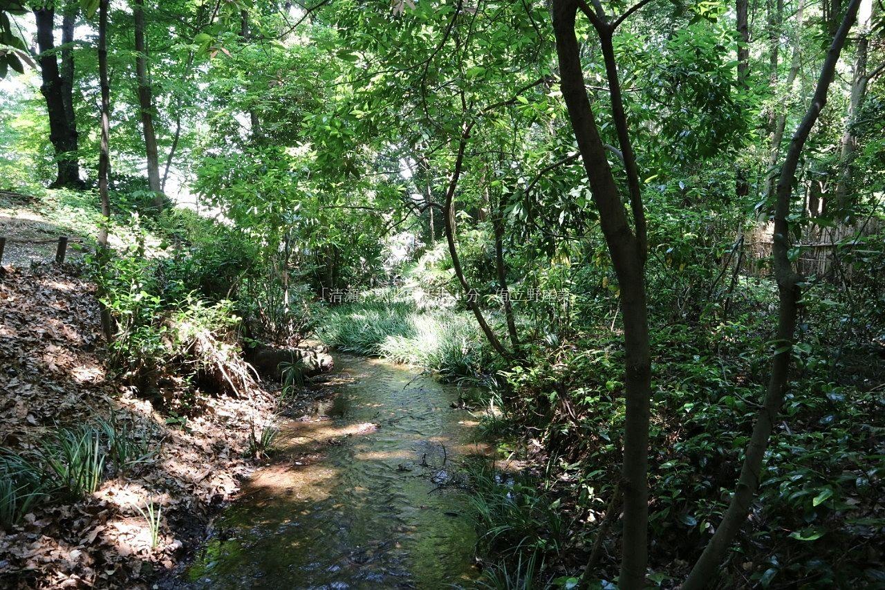 東久留米市南沢にある南沢緑地公園の湧水